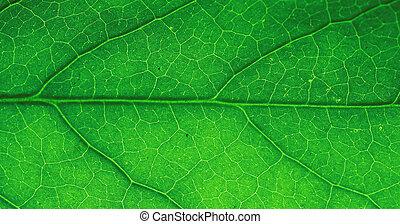 Macro of green leaf