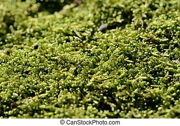 Macro of green moss on stump