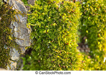 Macro of mossy forest floor in nature, top view