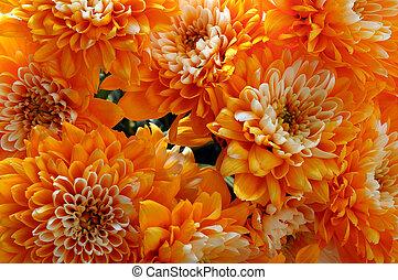 macro of orange aster flower - close up of orange aster ...