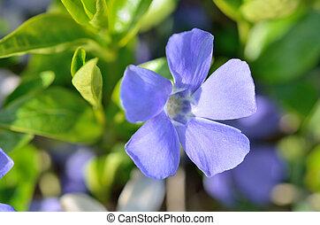 Macro of purple flower