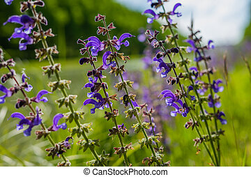 macro of purple plant
