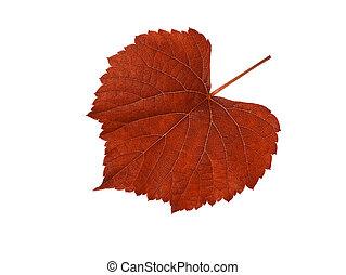 Macro of red grape leaf.