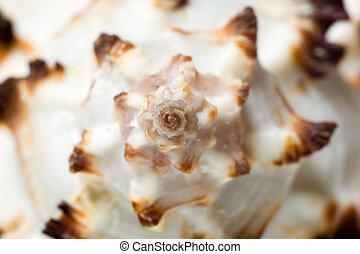 Macro of sea shell.