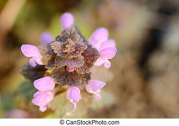 Macro of small pink flowers