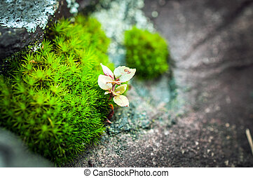 macro of small plant on the stone