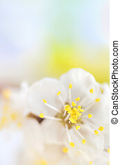 macro of spring tree flower