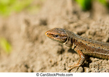 Macro of tiny lizard in the forest temperate zone