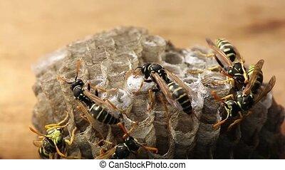 Macro of wasp (Hymenoptera)