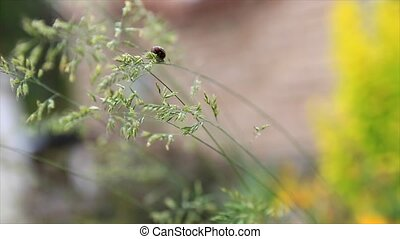 Macro of weevil beetle climbing on grass blade.