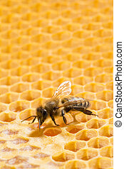 Macro of working bee on honeycells. - Close up view of the ...