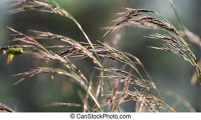 Macro of yellow grass swaying in the wind. Autumn. Shot to...