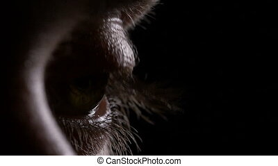 Macro of young man eye opening and blinking in the dark
