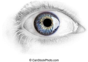 macro, ojo azul, con, lotes, de, detalles, aislado, blanco