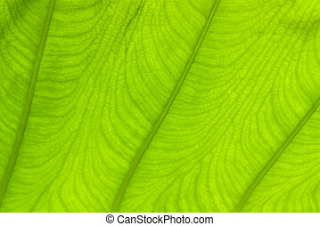 Macro pattern of green leaf for background