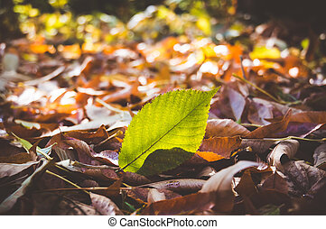macro photo of a fallen leaves in autumn forest,