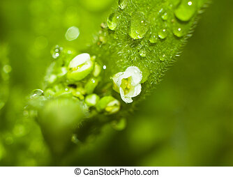 Macro photo of a flower with dew drops