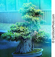 Macro photo of beautiful bonsai on the water