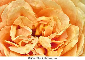 macro photo of beautiful yellow flower. color nature