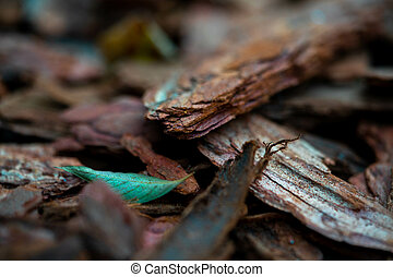 Macro photo of dry twigs with blurred background,