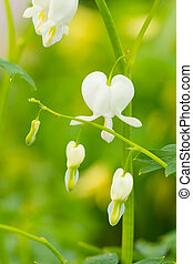 Macro photo of hearted-shaped flower blossoms - Macro photo ...