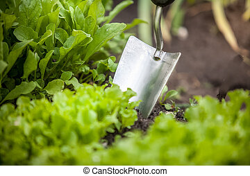 photo of metal hand shovel and lettuce bed