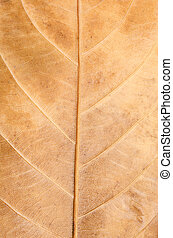 Macro Photo Of Natural Dry Leaf Pattern.