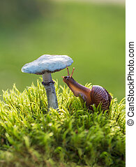 Macro photo of small brown snail sitting on the green mosses and interested in fresh hat of a mushroom