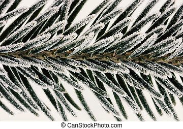macro photo spruce branches covered with ice crystals closeup, shallow depth of field