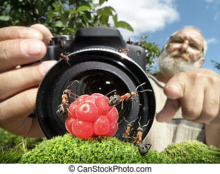 macro photographer managing ants, focused on ants