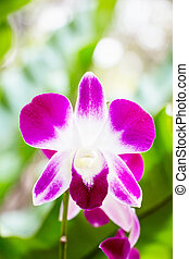 Macro Picture of Orchid