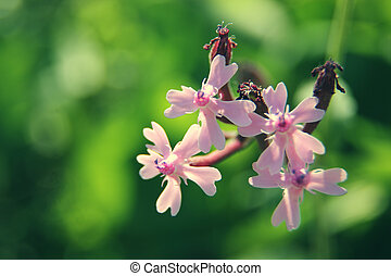 macro pink flowers on green background