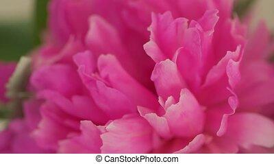 Macro pink petals event decoration camera movement