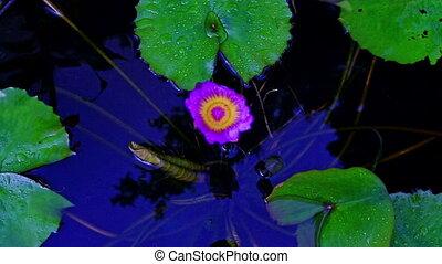 Macro Purple Water Flower in Vase As Pond in Tropical Park