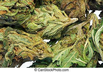 macro, résumé, bud., détail, cannabis