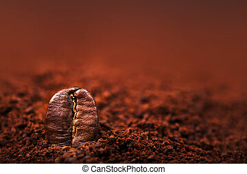 Macro Roasted coffee beans textured wallpaper for your design with copy space