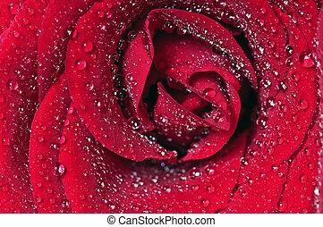 macro, roos, bloem