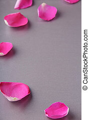 Separate petals of a beautiful pink rose on a gray background