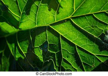 Macro shoot of green leaf