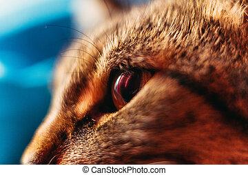 Macro shot. A closeup of a cat's eye.
