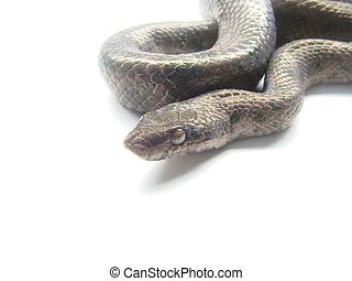 snake - macro shot black snake