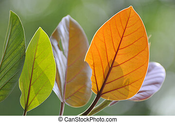 macro shot element of leaves for beautiful background