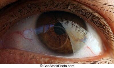 Macro Shot Of A Male Eye. - Macro Shot Of A Male Eye