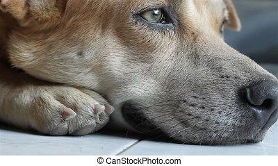 macro shot of a resting dog