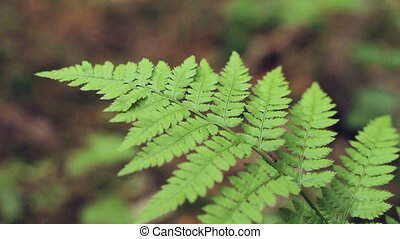 Macro shot of ant running on fern leaves - Close up of ant...