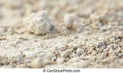 Macro shot of ants