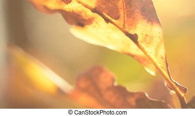 Macro shot of autumn leaves blowing on wind. Natural background. Autumn forest.