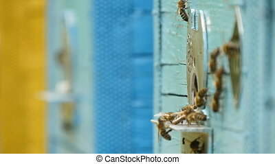 Macro shot of bees entering the hive hole from a metal rack...