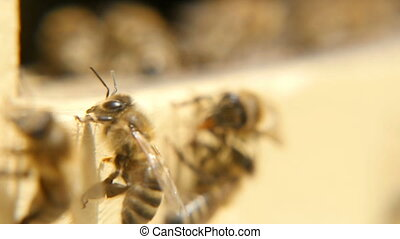 Macro shot of bees hardworking inside of a beehive on a...