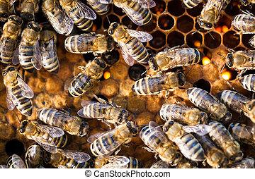 Macro shot of bees swarming on a honeycomb